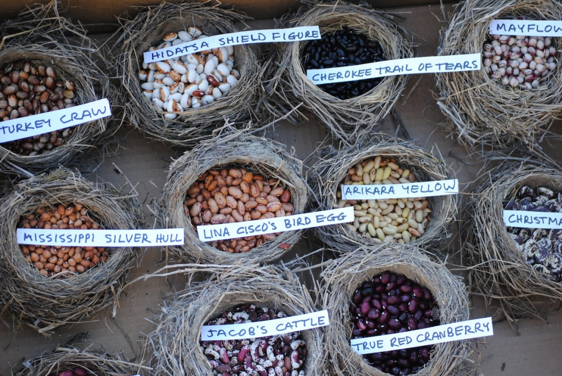Pepperfield bean varieties